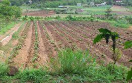 Tách thửa đất nông nghiệp